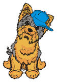 Yorkie boy in cap. Little yorkshire terrier boy in blue cap sit and watch Royalty Free Stock Images
