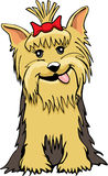 Yorkie cartoon. A cartoon of a yorkshire terrier dame royalty free illustration