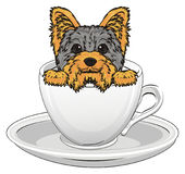Yorkie in cup Royalty Free Stock Photography