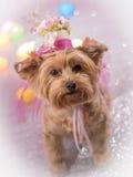 Yorkie die haar Pasen-Hoed dragen Royalty-vrije Stock Fotografie