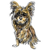Yorkie Dog Sketch Royalty Free Stock Photos