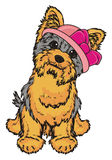 Yorkie girl in pink hat Stock Photo