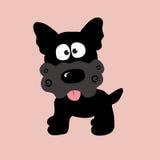 Yorkie rizado negro Foto de archivo libre de regalías