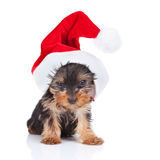 Yorkie toy wearing a nice santa cap Royalty Free Stock Photography