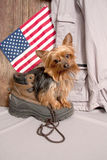 Yorkie waiting for my Master Royalty Free Stock Photography