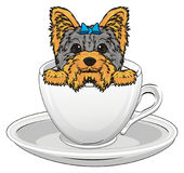 Yorkie in white cup Stock Images