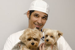 Yorkies and Owner Stock Image