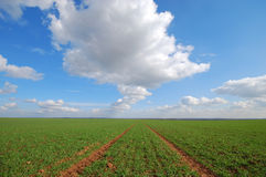 Yorkshire-Ackerland Lizenzfreie Stockfotos