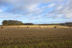 Yorkshire-Ackerland- und -Stoppelfelder im Winter Lizenzfreie Stockfotos