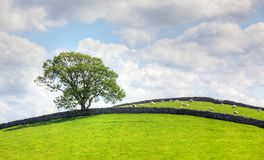 Yorkshire Dales. A typical landscape with old stone walls in the heart of England's Yorkshire Dales Royalty Free Stock Photography