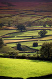 Yorkshire dales in evening sun. Fields form a pattern in the Yorkshire dales on a summers evening stock image