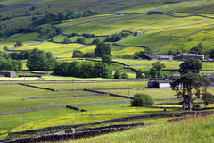 Yorkshire Dales - Farmland - England. Traditional dry-stone walls in the farmland of the Yorkshire Dales in the north east of England Royalty Free Stock Image