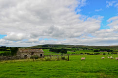 Yorkshire Dales landscape. The stunning Yorkshire Dales landscape on a summers day Royalty Free Stock Photo