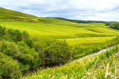 Yorkshire Dales, landscape in Summer, England Stock Photos