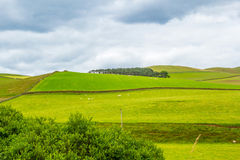Yorkshire Dales, landscape in Summer, England, United Kingdom Royalty Free Stock Images