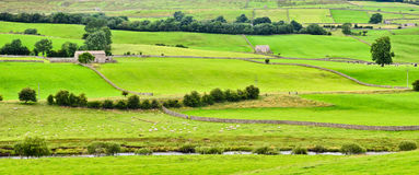 Yorkshire Dales landscape. Sunning Yorkshire Dales scenery on a summers day Royalty Free Stock Photo