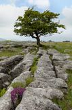 Yorkshire Dales lone tree Stock Photos
