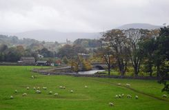 Yorkshire Dales National Park Swaledale sheep grazing. Taken from near villages of Hardraw and with view across to Hawes in Wensleydale with the river ure in stock photo