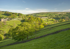 Yorkshire dales summer scene Stock Images