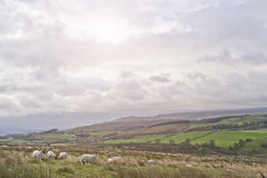 Yorkshire doliny Zdjęcie Royalty Free