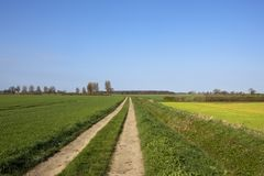 Yorkshire farm track and arable fields in springtime. A scenic farm track with poplar trees and spring woodland near wheat fields under a blue sky in Yorkshire Stock Photos