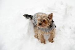 Yorkshire i snö Arkivbilder