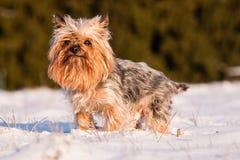 Yorkshire im Winter Lizenzfreie Stockfotografie