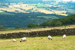 Yorkshire landscape. North York Moors landscape with sheep and trees and a patchwork of fields and dry stone walls Stock Photo