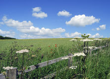 Yorkshire meadow Stock Images