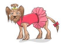Yorkshire niet gelukkig Terrier Stock Foto