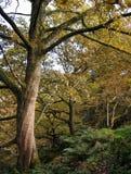 Yorkshire skog i höst fotografering för bildbyråer
