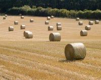 Yorkshire-Stroh Stockbilder