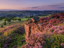 Yorkshire Sunset. Heather in flower at sunset, in yorkshire UK Stock Photography
