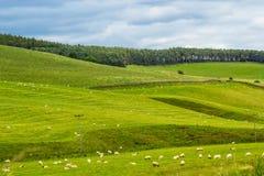 Yorkshire-Täler, Landschaft im Sommer, England Lizenzfreie Stockbilder