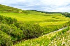 Yorkshire-Täler, Landschaft im Sommer, England Stockfotos