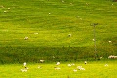 Yorkshire-Täler, Landschaft im Sommer, England Lizenzfreies Stockfoto