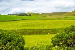 Yorkshire-Täler, Landschaft im Sommer, England, Vereinigtes Königreich Stockfoto