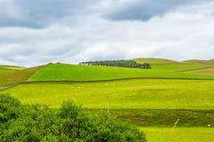 Yorkshire-Täler, Landschaft im Sommer, England, Vereinigtes Königreich Lizenzfreie Stockbilder