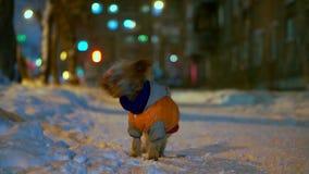 Yorkshire teriera pies w pomarańcze puszka kurtki stojakach na śnieżnej miasto ulicie przy nocą Zakłada szczęśliwych bieg i właśc zbiory wideo