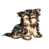 Yorkshire terrier. The  funny small  Yorkshire terrier  puppy Royalty Free Stock Photo