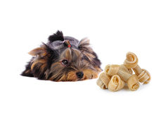 Yorkshire Terrier and Artificial a bone on white background Stock Photo