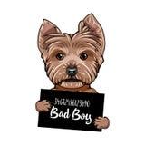 Yorkshire terrier Bad boy. Dog prison. Police mugshot background. Yorkshire terrier criminal. Vector. Yorkshire terrier Bad boy. Dog prison. Police mugshot royalty free illustration