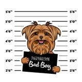 Yorkshire terrier Bad boy. Dog prison. Police mugshot background. Yorkshire terrier criminal. Arrest photo. Vector. Yorkshire terrier Bad boy. Dog prison royalty free illustration