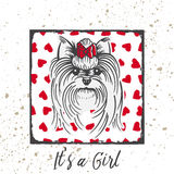 Yorkshire Terrier with a bow. Hand drawn portrait with the inscription-It s a Girl Royalty Free Stock Image