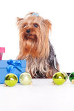 Yorkshire terrier  on christmas Royalty Free Stock Photos