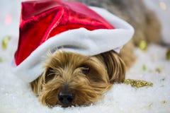 Yorkshire terrier com o chapéu de Papai Noel, encontrando-se na neve fotos de stock