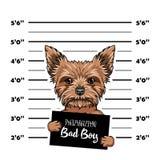 Yorkshire Terrier dog Bad boy. Dog prison. Police mugshot background. Yorkshire terrier criminal. Arrested dog. Vector. Yorkshire Terrier dog Bad boy. Dog royalty free illustration