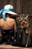 Yorkshire Terrier dog in bag Royalty Free Stock Photo