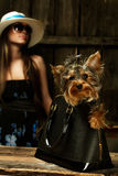 Yorkshire Terrier dog in bag Royalty Free Stock Photography
