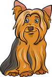 Yorkshire terrier dog cartoon illustration Royalty Free Stock Photography